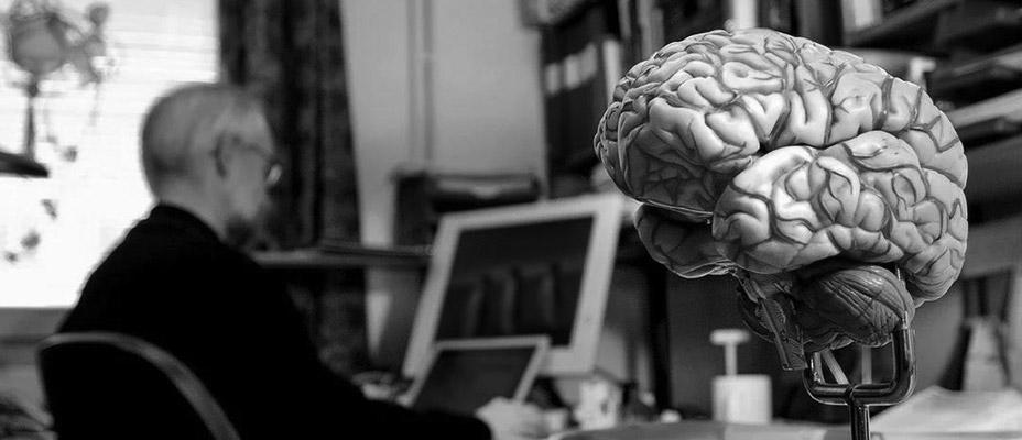И, наконец, о мозге